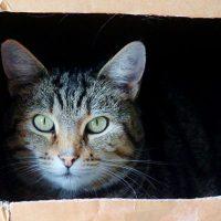 como ayudar a una gata a parir