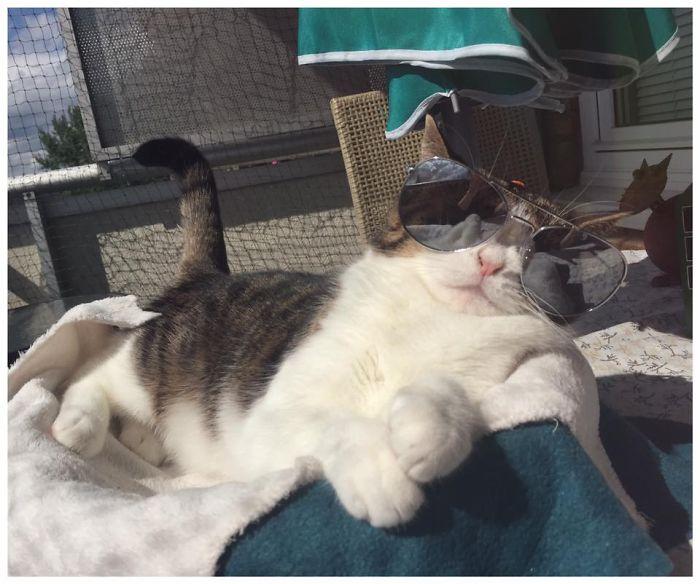 gato sin nariz