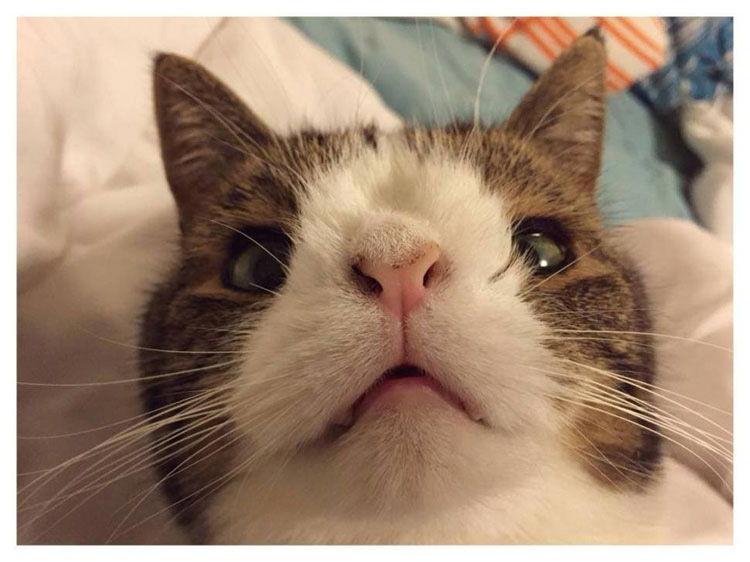 gato cara extraña nariz