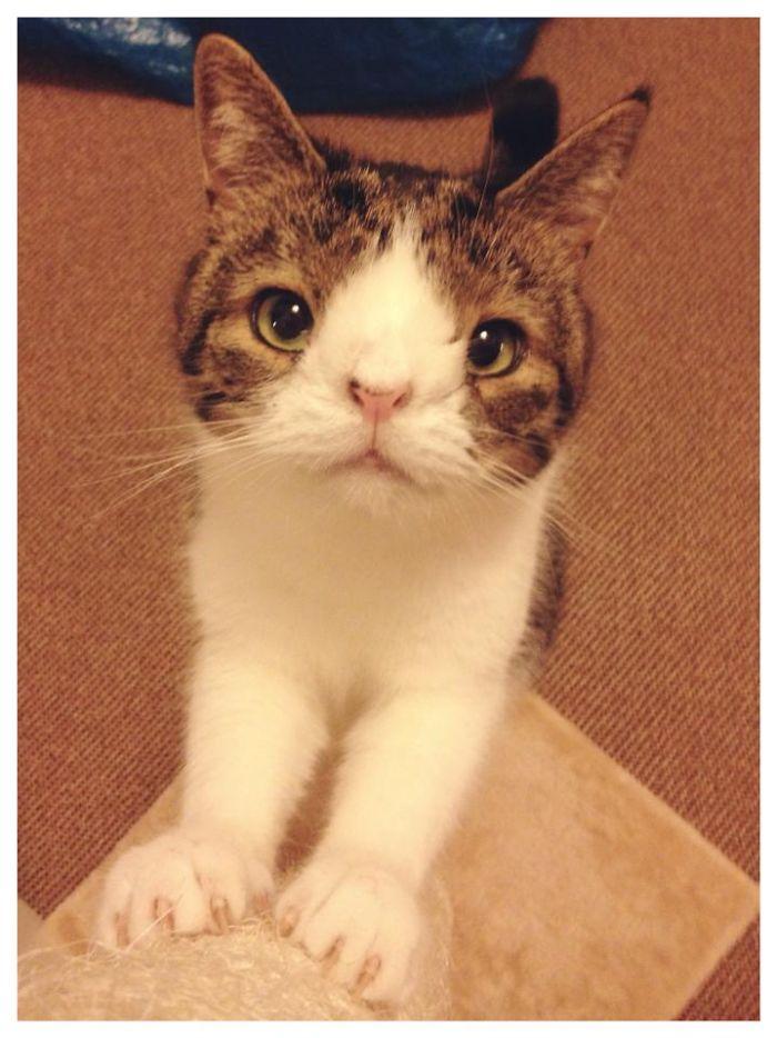 gato con sindrome de down