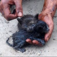 fotos de gatitos rescatados
