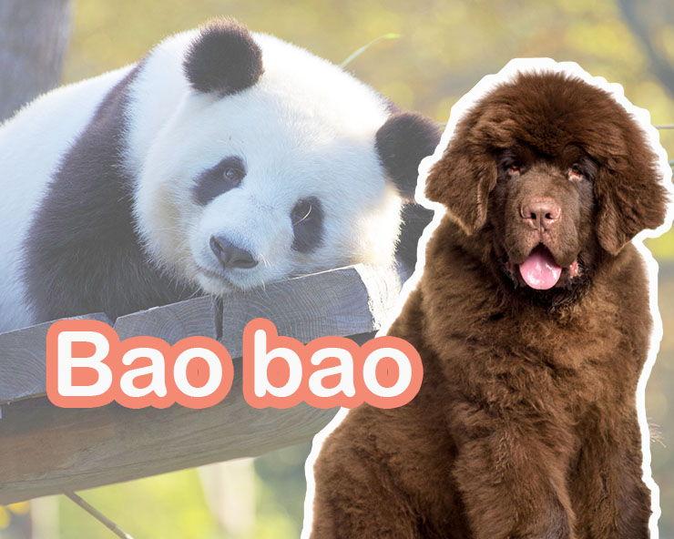nombres chinos para perros