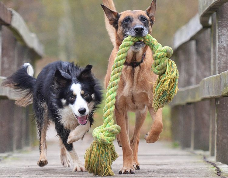 haz mordedores para perros