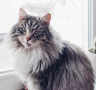 nombres para gato