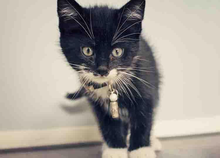 nombres para gatas negras