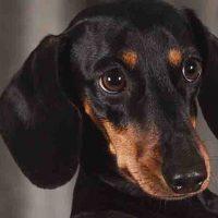 perra puede tener cachorros de diferentes perros