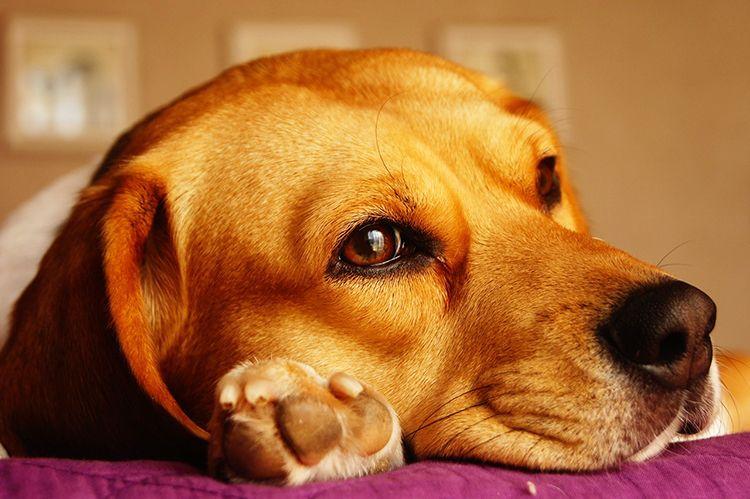 tos de las perreras tratamiento sintomas