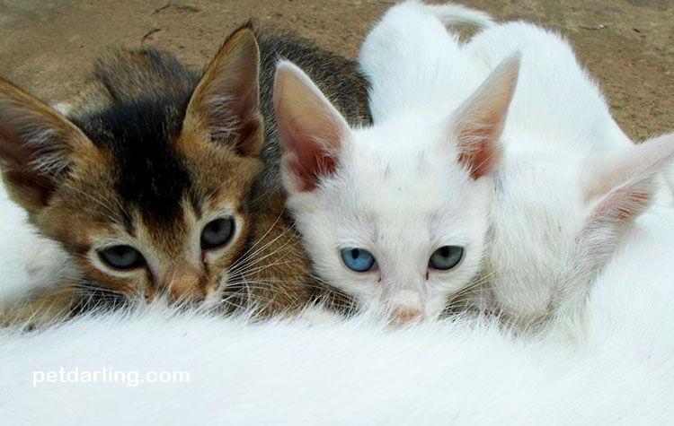 que comen los gatos bebes