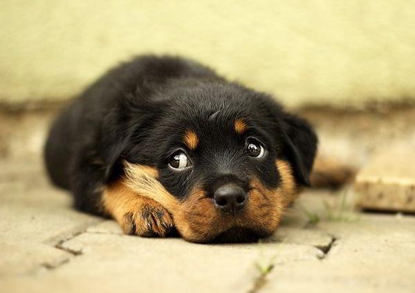 fotos de perritos tiernos