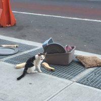 gato abandonado en la ciudad
