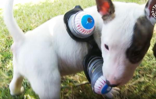 imagenes de perritos pequeños bullterrier