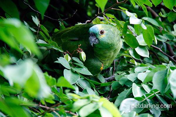 fauna de la selva