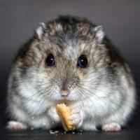 nombres para hamster