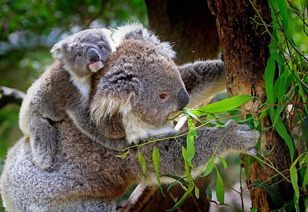 imagenes de animales herbívoros