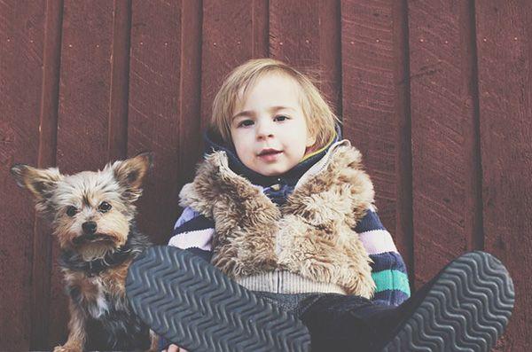 acaros en los perros
