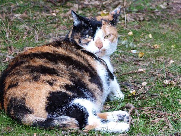 cuidados para una gata embarazada