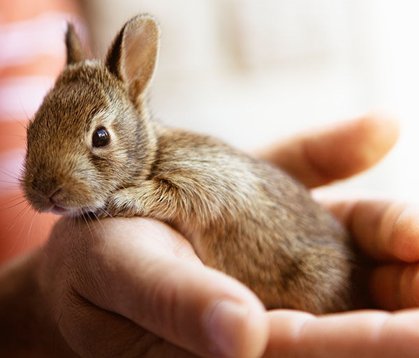 que nombre poner a un conejo