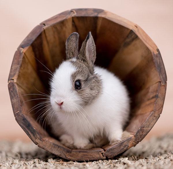como llamar a un conejo