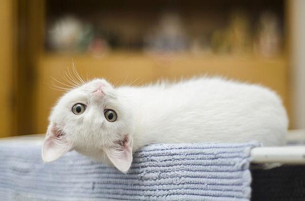 nombres de gatitos machos