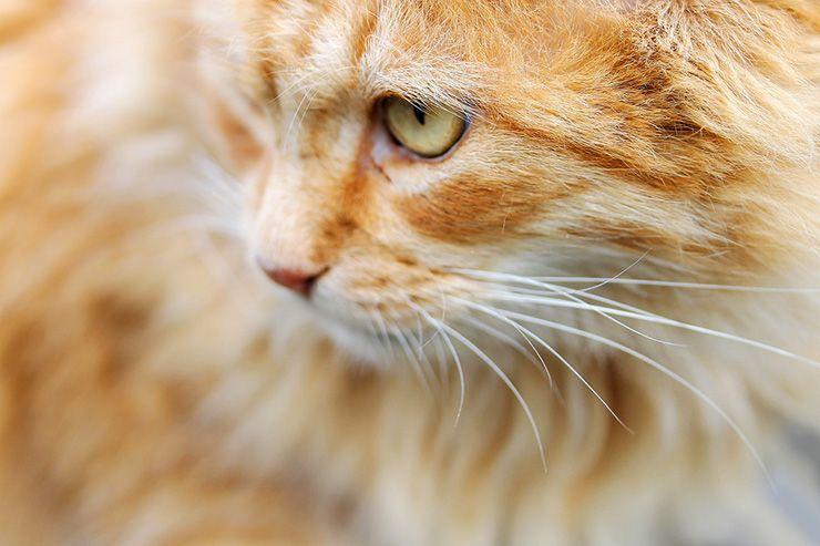 nombres de gato macho