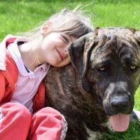 perros guardianes para familias