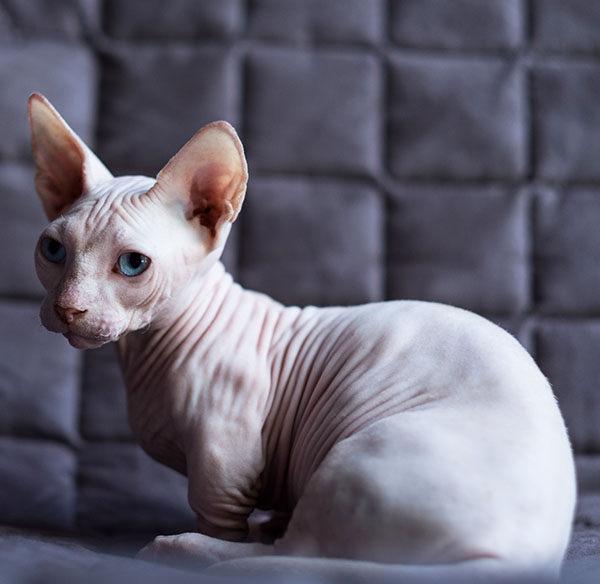 Bambino gato