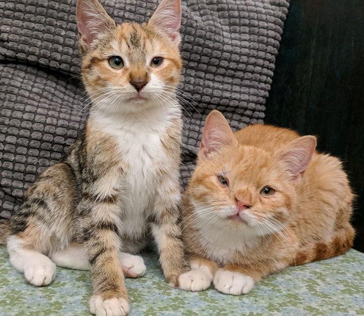 gatitos rescatados enfermedad genetica