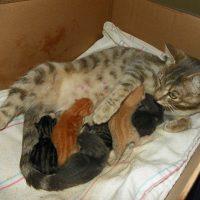 mi gata no expulso la placenta