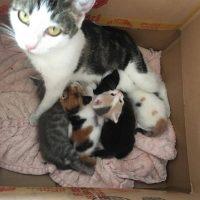 gatitos rescatados de la calle