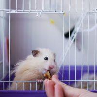 jaula para hamster