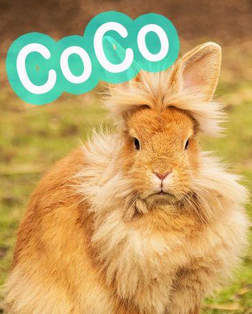 nombres de conejos