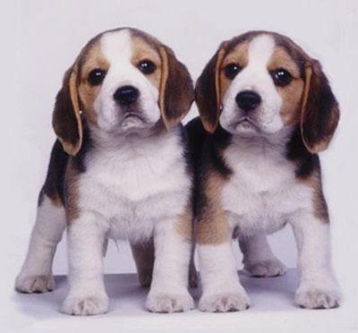nombres para perros beagle