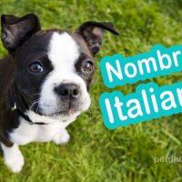nombres para perros en italiano