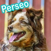 nombres para perros en griego