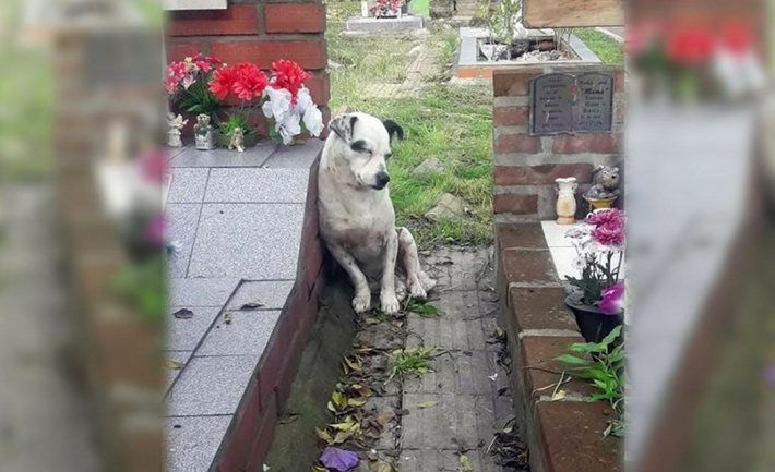 perro espera en la tumba de su dueño en boulogne