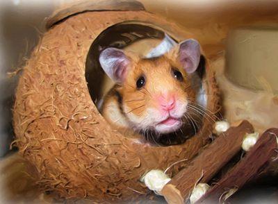 casitas para hamsters