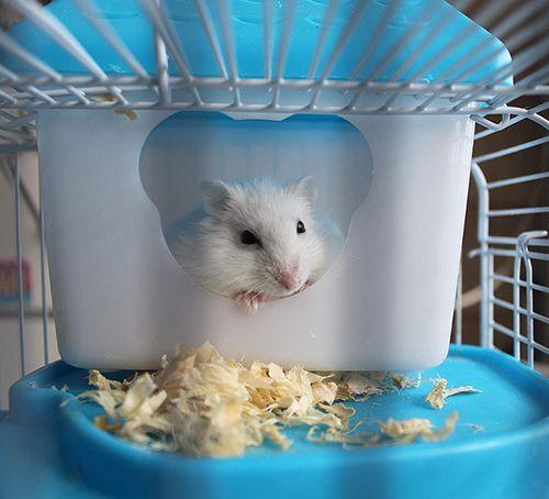 la mejor casa para hamsters