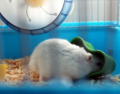 accesorios de la jaula del hamster