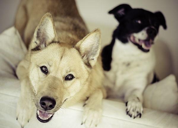 perros más saludables