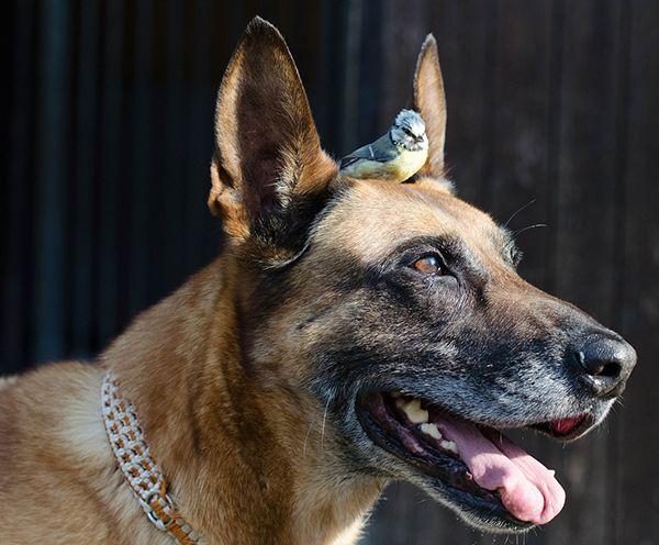 los perros más saludables