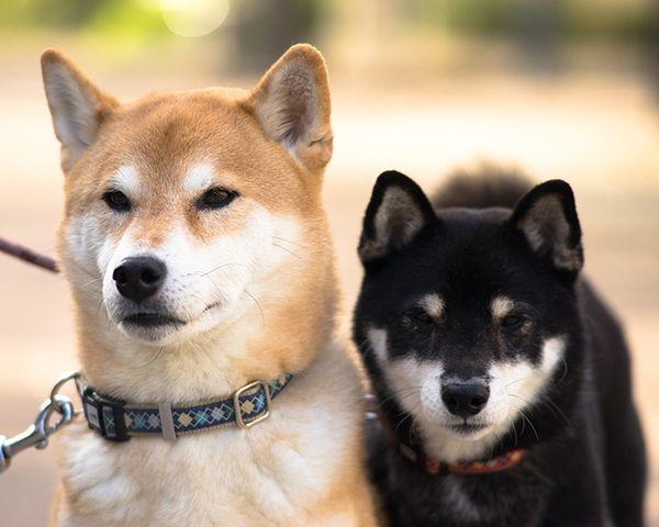 las razas de perros mas saludables