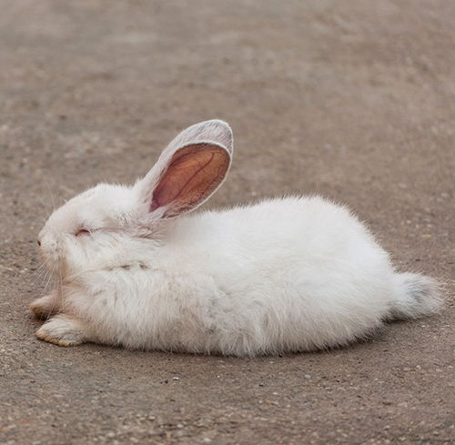 conejo enfermo