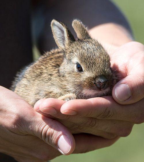 vacunas para conejos de exterior