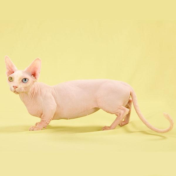 gato bambino