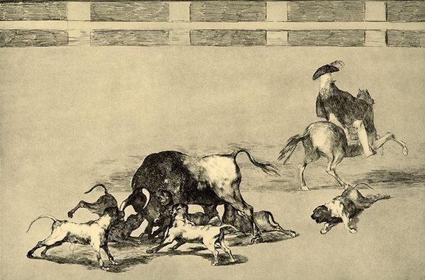 alano español toros
