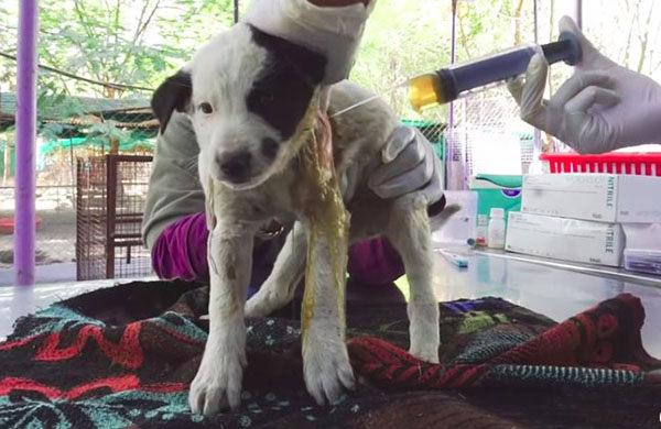 perra pide ayuda para su cachorro video