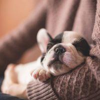 como tranquilizar a un perro