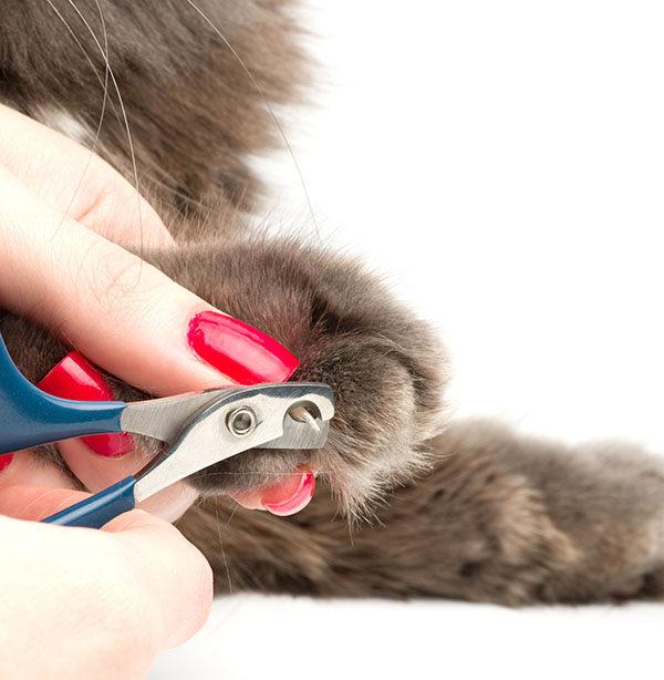 cortar uñas conejo