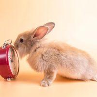 cuanto vive un conejo enano