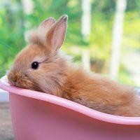 los conejos se bañan